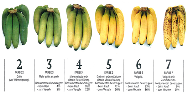 Bananen_Farbskala_neu